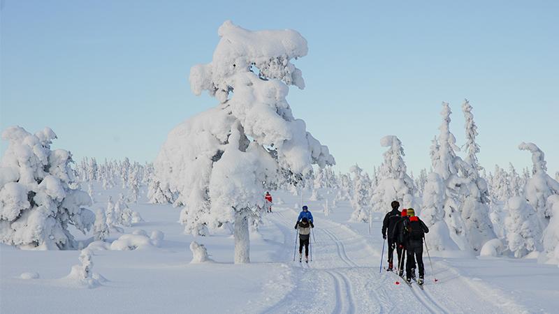 Skiløyper i Hamar-regionen